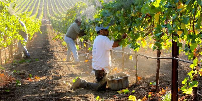 カリフォルニアワインの今を知る[全4回]